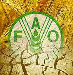 La FAO alerta sobre la necesidad de cambiar nuestros hábitos alimenticios