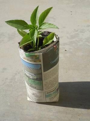 Cómo hacer semilleros de papel de periódico