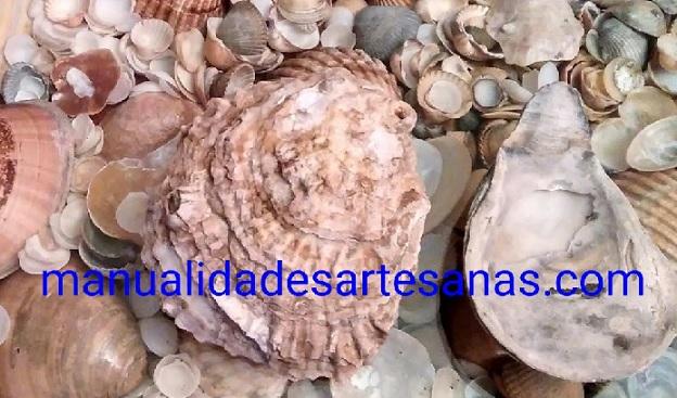 Piezas para hacer el adorno con conchas marinas