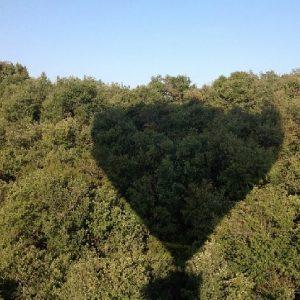Sombra globo aerostático en copa de árbol