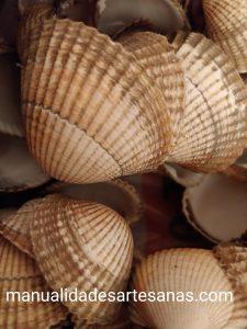 Cáscaras de berberechos para manualidades
