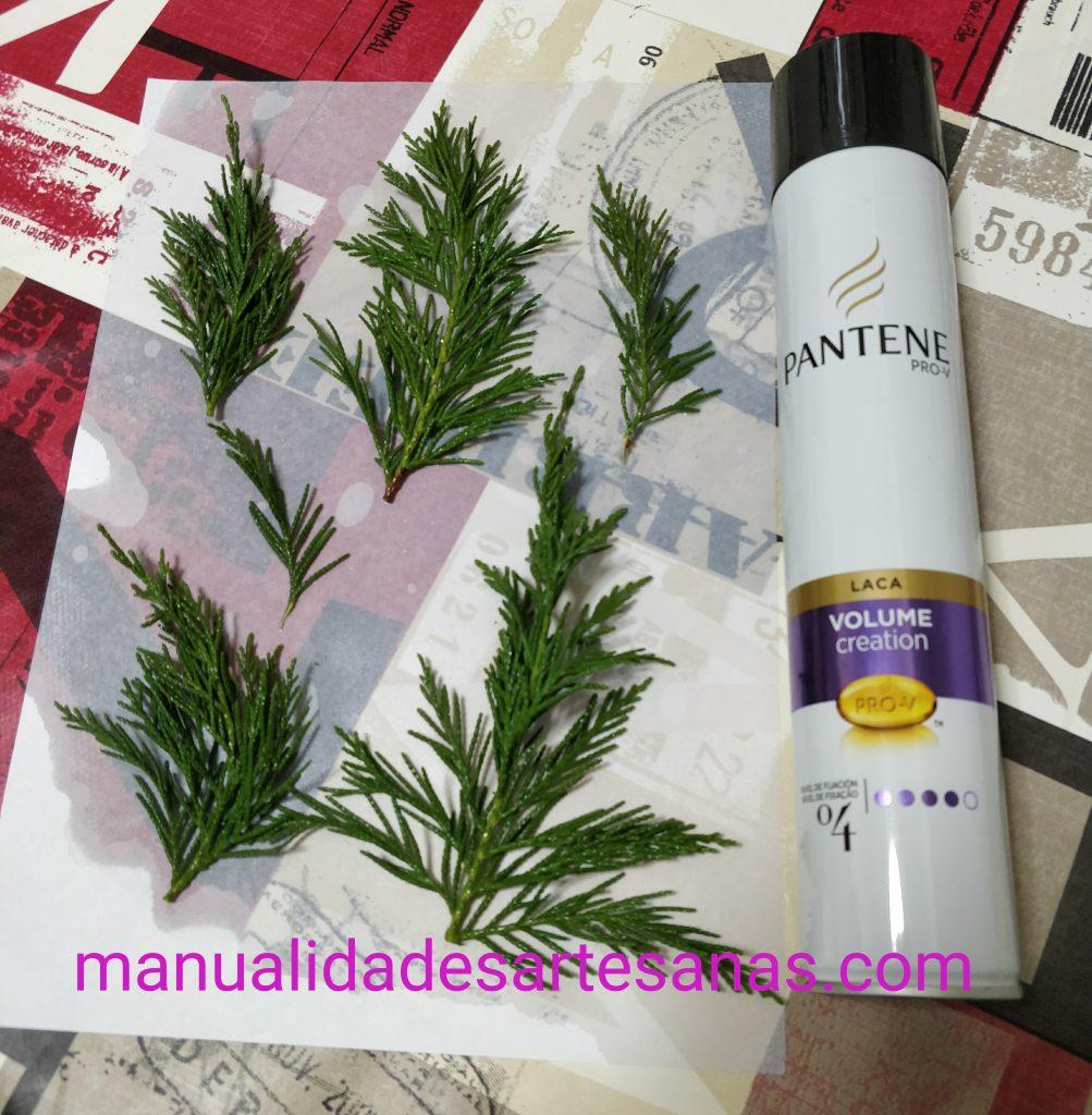 Ramas de pino liofilizadas con laca de pelo